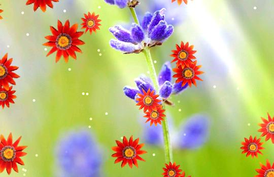 Flower Live Wallpaper Ekran Görüntüleri - 1
