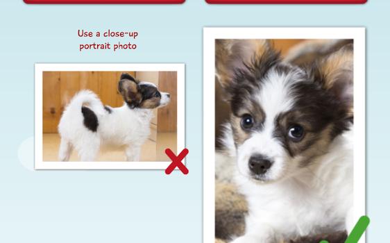 My Talking Pet Ekran Görüntüleri - 5
