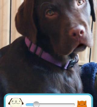 My Talking Pet Ekran Görüntüleri - 2