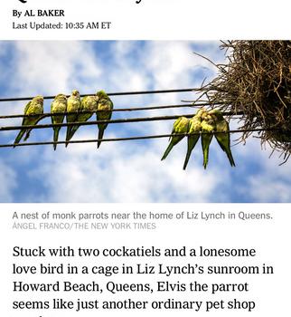 NYTimes Ekran Görüntüleri - 3