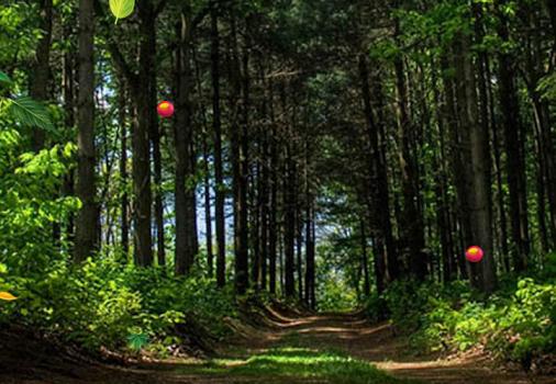 Orman Canlı Duvar Kağıdı Ekran Görüntüleri - 4