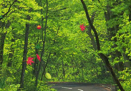 Orman Canlı Duvar Kağıdı Ekran Görüntüleri - 1