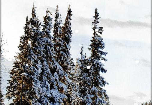 Snowfall Live Wallpaper Ekran Görüntüleri - 1
