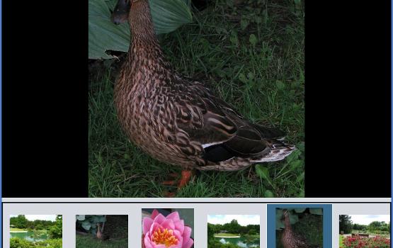 Bloom Ekran Görüntüleri - 3