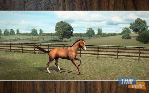 My Horse Ekran Görüntüleri - 3