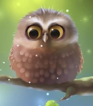 Little Owl Lite Ekran Görüntüleri - 3