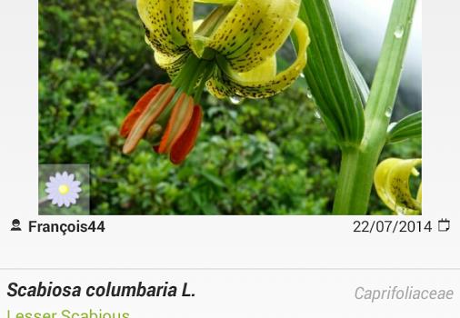 PlantNet Ekran Görüntüleri - 3