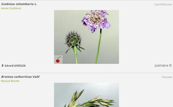 PlantNet Ekran Görüntüleri - 1