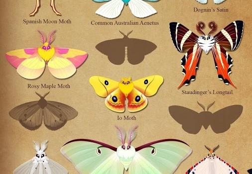 Flutter: Starlight Ekran Görüntüleri - 3