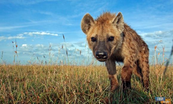 Afrika'da Vahşi Yaşam Teması Ekran Görüntüleri - 2
