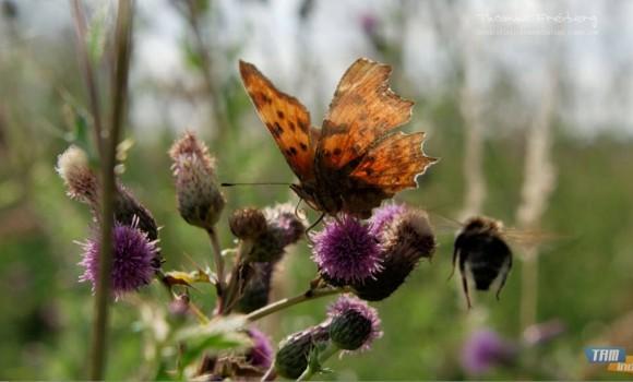 Almanya Kelebekleri Teması Ekran Görüntüleri - 3