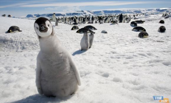 Antarktika Teması Ekran Görüntüleri - 2