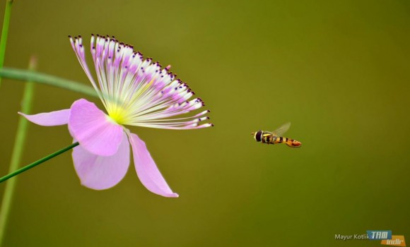 Arılar Teması Ekran Görüntüleri - 3