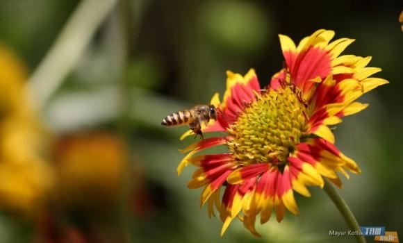 Arılar Teması Ekran Görüntüleri - 2