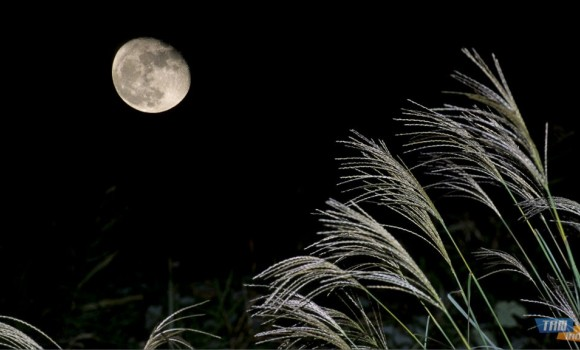 Ay Işığı Teması Ekran Görüntüleri - 2