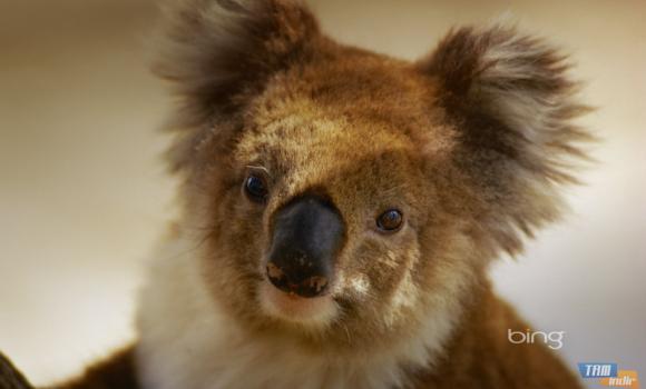 Bing'in En İyileri: Avustralya 2 Teması Ekran Görüntüleri - 3