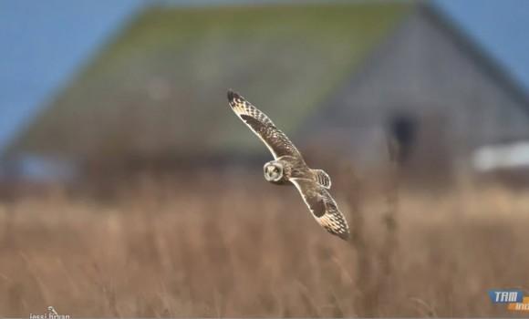 Büyük Kuşlar Teması Ekran Görüntüleri - 3