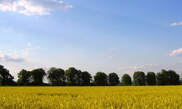 Çek Baharı Teması Ekran Görüntüleri - 3