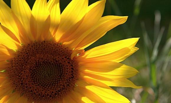 Çiçekler ve Yapraklar Teması Ekran Görüntüleri - 2