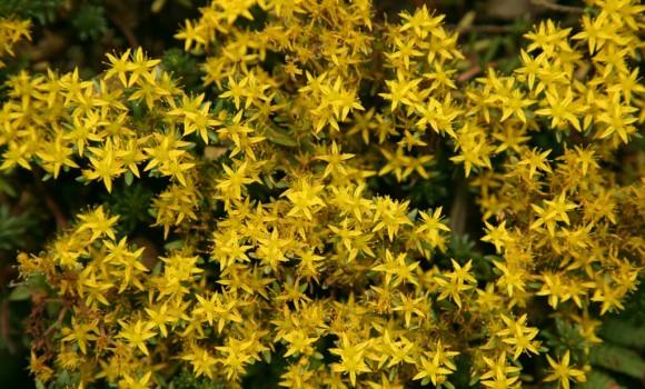 Çiçekler ve Yapraklar Teması Ekran Görüntüleri - 1
