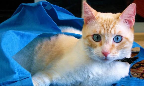 Daima Kedi Teması Ekran Görüntüleri - 2