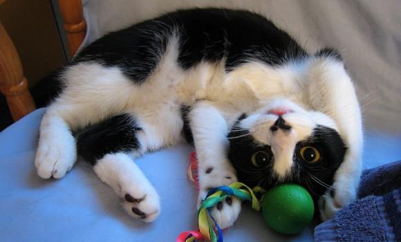 Daima Kedi Teması Ekran Görüntüleri - 1
