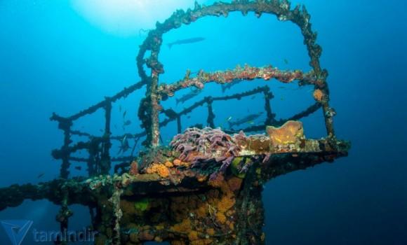 Deniz Kalıntıları Teması Ekran Görüntüleri - 1