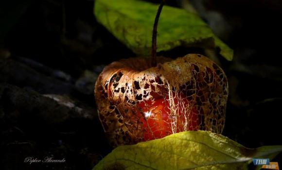 Doğanın Renkleri Teması Ekran Görüntüleri - 1