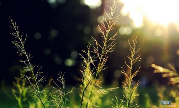Flora Dinamik Teması Ekran Görüntüleri - 3
