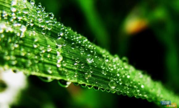 Flora Dinamik Teması Ekran Görüntüleri - 1