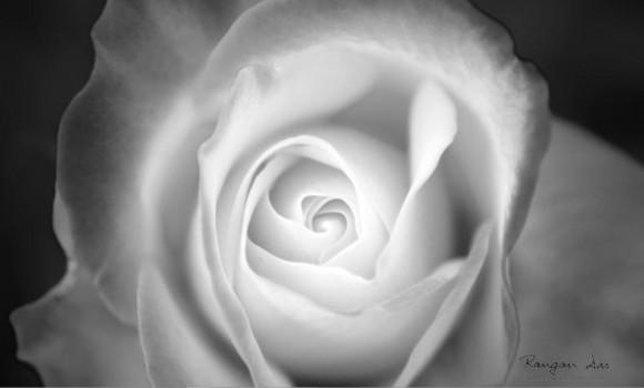 Floral Geometri Teması Ekran Görüntüleri - 1