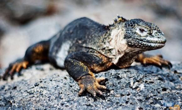 Galapagos Teması Ekran Görüntüleri - 1