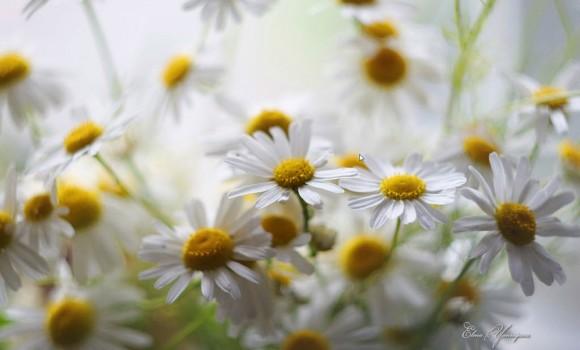 Göz Alıcı Çiçekler Teması Ekran Görüntüleri - 3