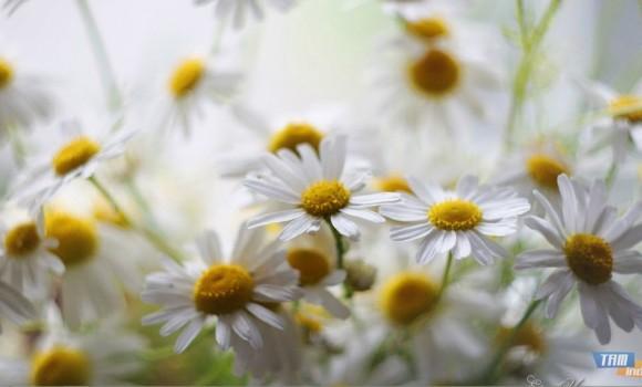 Güzel Çiçekler Teması Ekran Görüntüleri - 3