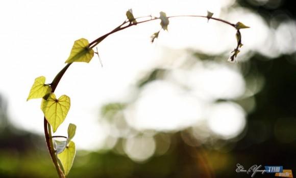 Güzel Çiçekler Teması Ekran Görüntüleri - 1