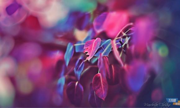 Hayal Bahçesi Teması Ekran Görüntüleri - 2