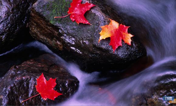 Kanada Teması Ekran Görüntüleri - 3