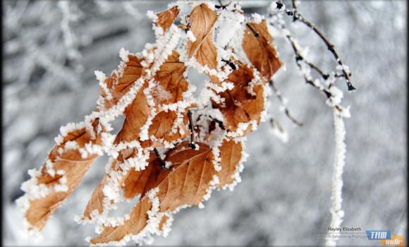 Kış Bahçesi Teması Ekran Görüntüleri - 3