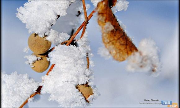 Kış Bahçesi Teması Ekran Görüntüleri - 1