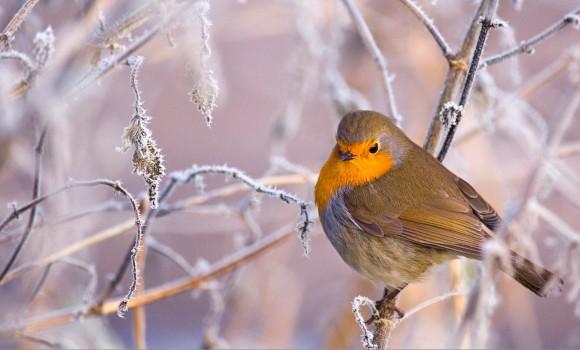 Kış Teması Ekran Görüntüleri - 1