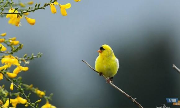 Küçük Kuşlar Teması Ekran Görüntüleri - 3