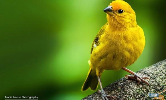 Kuşların Gökküşağı Teması Ekran Görüntüleri - 3