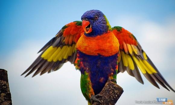 Kuşların Gökküşağı Teması Ekran Görüntüleri - 2