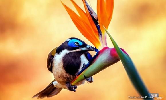 Kuşların Gökküşağı Teması Ekran Görüntüleri - 1