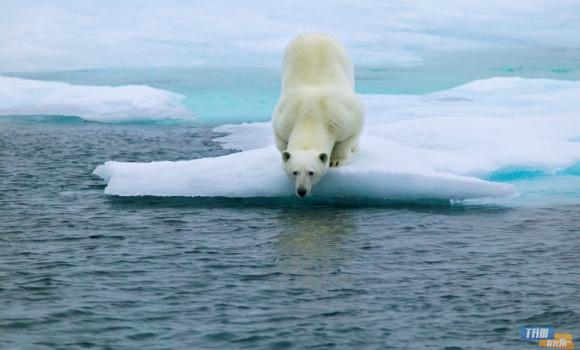 Kutup Ayıları Teması Ekran Görüntüleri - 1