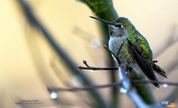 Kuzeybatı Pasifik Kuşları Teması Ekran Görüntüleri - 3
