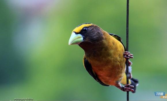 Kuzeybatı Pasifik Kuşları Teması Ekran Görüntüleri - 1