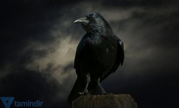 Kuzgunlar ve Kargalar Teması Ekran Görüntüleri - 2