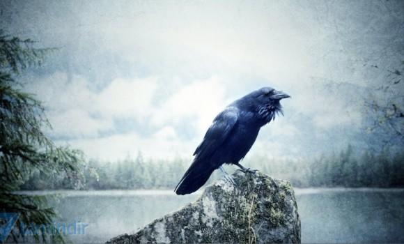 Kuzgunlar ve Kargalar Teması Ekran Görüntüleri - 1