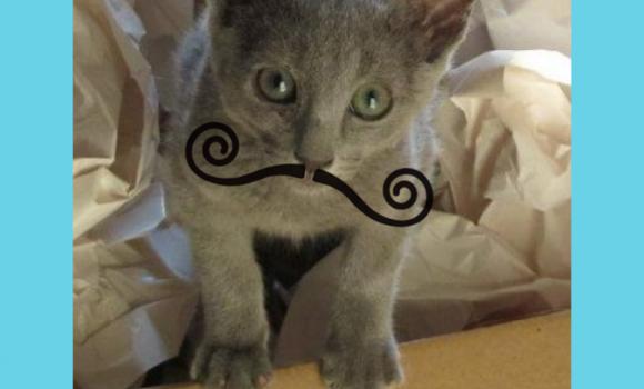 Mustache Booth Ekran Görüntüleri - 2